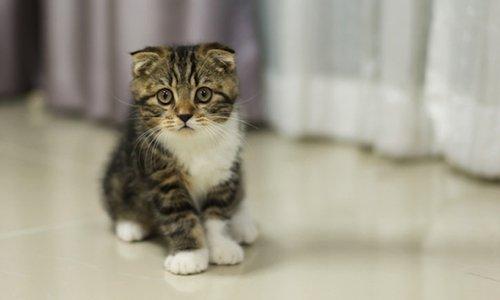 Pétition : Semaine nationale de stérilisation et d'identification des chats