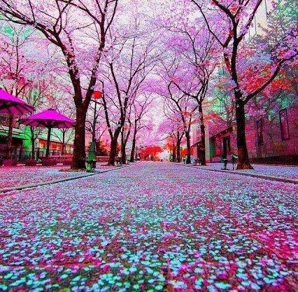 SPRING IN JAPAN...