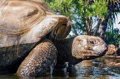 Seychelles : menaces sur Aldabra et ses tortues géantes