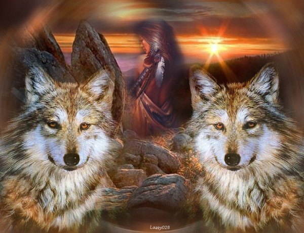 indien loup