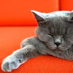 Au tour de la Nouvelle-Écosse d'interdire le dégriffage des chats: qu'en est-il au Québec?