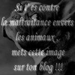 Contre la maltraitence animal !
