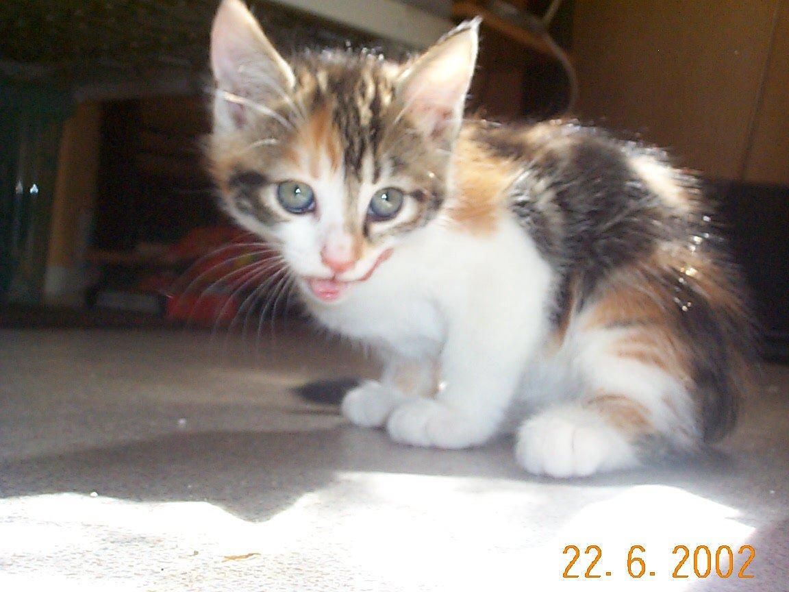 Un petit chaton <3