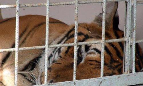 Pétition : Stop au cirque avec animaux sauvages !
