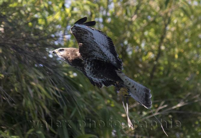 ZooParc de Beauval - Walex Photos Vidéos