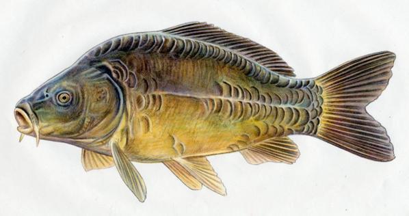 créer un forum : les passionnés de pêche - Portail