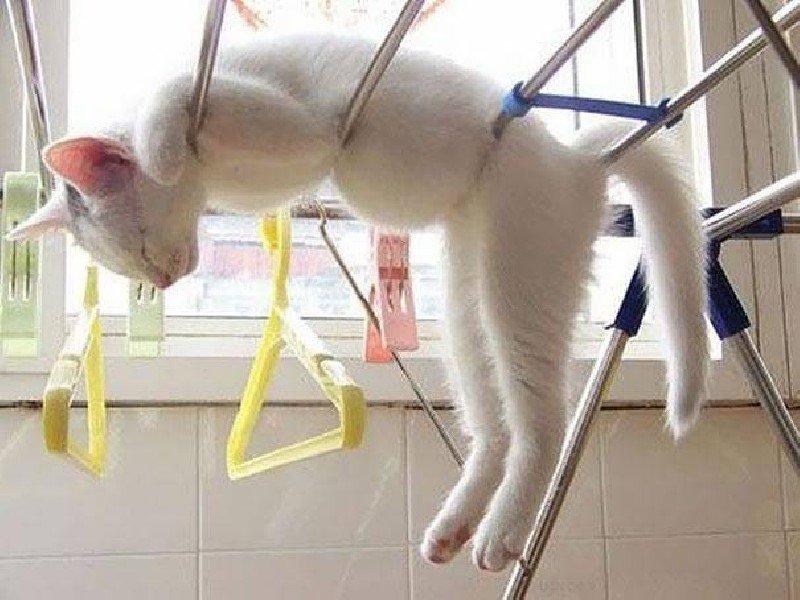 Les chats peuvent dormir n'importe où, trop drôle