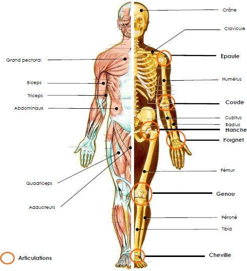 Ostéopathe Alain Lecerf – Osteopathe Quimper