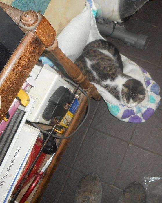 mon blog hommage a zoe. - mais blog   https://mais-pseudo-animaux.skyrock.com