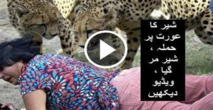 Lion Caught People in Circus | Video Ladieskorner