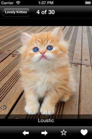 Procurez-vous Lovely Kitties dans l'App Store. Consultez les captures d'écran et les avis, et lisez les critiques d'autres utilisateurs.