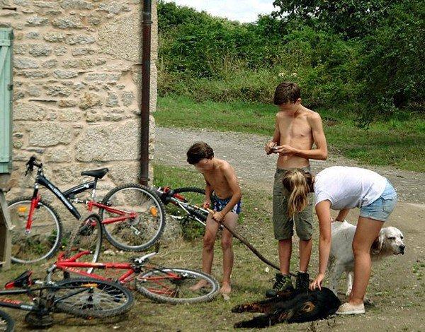 Aidons-les-animaux Mec, 51 ans  Charleroi - Belgique en couple avec aider-lesanimaux