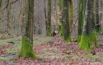 Loïc photo nature