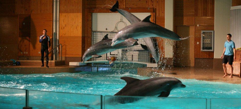 Ce que vous devez savoir sur les delphinariums