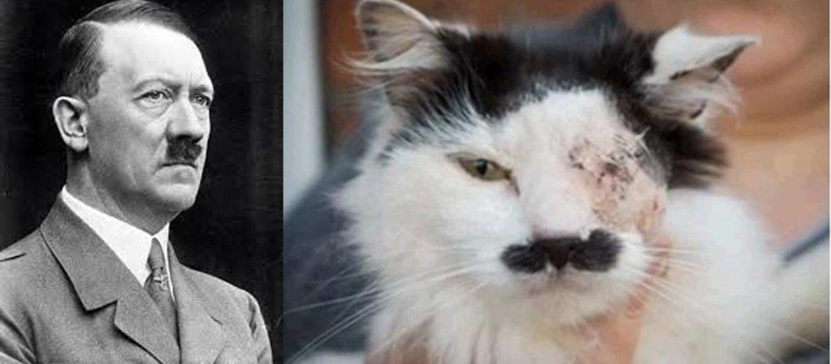 Un chat torturé parce qu'il ressemblait à Hitler