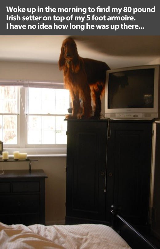 Funny dogs:I saw a spider.
