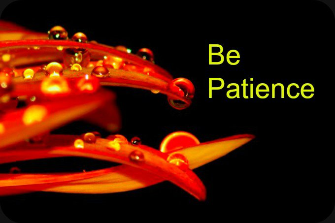 Patience is the Key to Success. | Daily Poetry and Stories Portal | Easy Branches