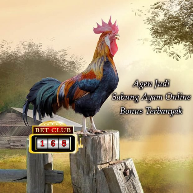 Situs Judi Sabung Ayam Online Bonus Terbesar Deposit