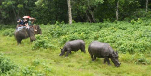 Jungle Safari in Nepal | Nepal Jungle Safari package