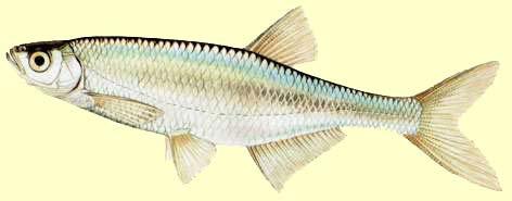 la biologie du poisson