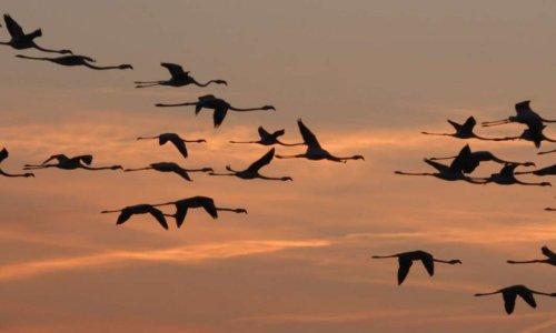 Pétition : Contre la chasse aux oiseaux migrateurs