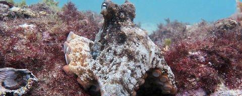 Caché au cœur d'une île du pacifique, le Lac aux méduses abrite plus de 8 millions de cnidaires qui, au fil de...