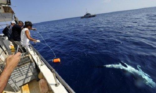Pétition : Ne plus jamais voir de chien mourir en servant d'appâts vifs pour pour la pêche aux requins