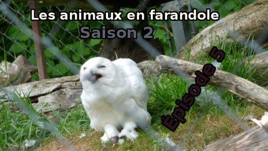 Les animaux en farandole: saison 2: épisode 5 - Vidéo dailymotion