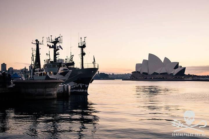 Sea Shepherd Australia Liked · August 31