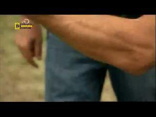 AMERICAN GUNS 500 000 DOLLARS D ARMES PART3