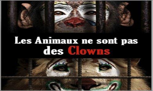 Pétition : Pour des cirques sans animaux sauvages à Niort