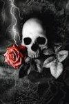 l'amour tue