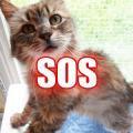 ClicAnimaux.com - Collectes - SOS : SAUVONS LA SPA LE CHAT ET LA VIE !