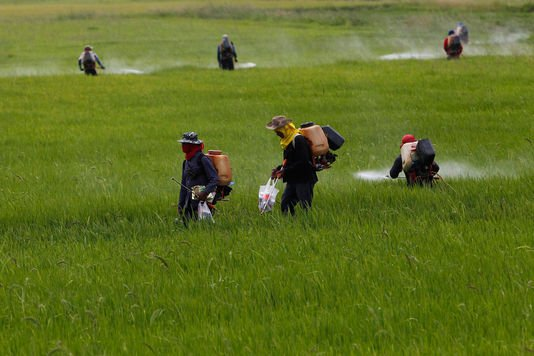 Pesticides : les preuves du danger s'accumulent