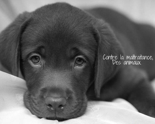 Contre la maltraitance des animaux. | Facebook