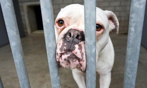 Pétition : Pour que les actes de cruauté envers les animaux soient considérés comme un crime