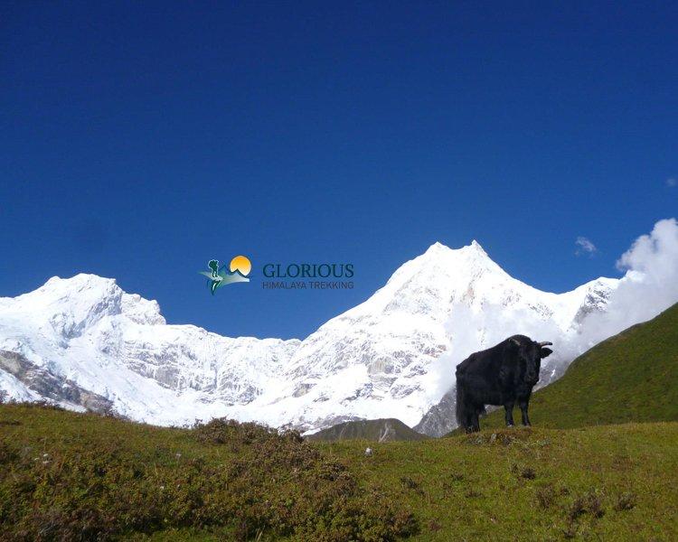 Manaslu Round Trekking   Excellent Hike Across Manaslu