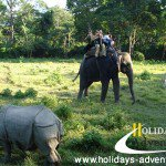 Jungle Safari holidays in Nepal, Chitwan National park tour. | Holidays adventure in Nepal, Trekking in Nepal, Himalayan Trekking operator agency in Nepal