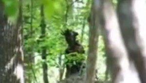 Etrange créature filmée dans la forêt | Légendes urbaines