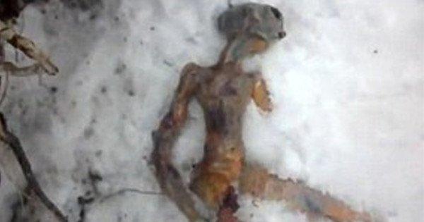 Une étrange créature aux allures d'extra-terrestre retrouvée morte à Sept-îles