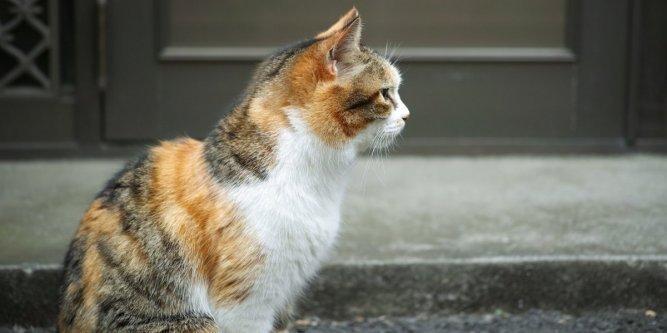 Tarn-et-Garonne : un chat torturé à mort par trois ados