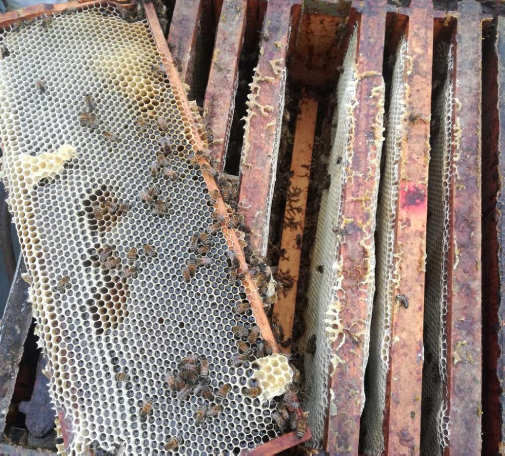 24 ruches détruites à cause d'un épandage