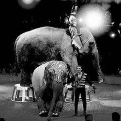 nos beau éléphant