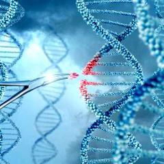 Les thérapies basées sur les fameux ciseaux génétiques CRISPR-Cas9 pourraient augmenter le risque de cancer