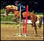 le blog de Ramses-mon-poney