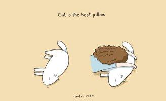 Humour : pourquoi avoir un chat ?