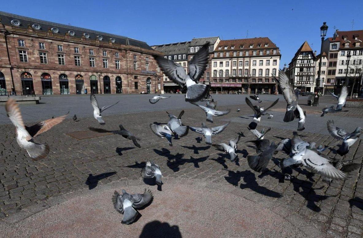 Strasbourg envahie par les pigeons