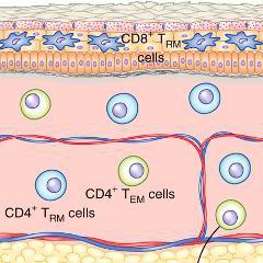 Vaccins anticancéreux: comment la voie nasale améliore la stimulation du système immunitaire