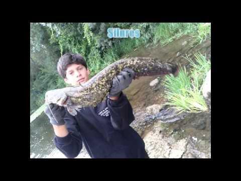 pêche du carnassiers 2014-2015
