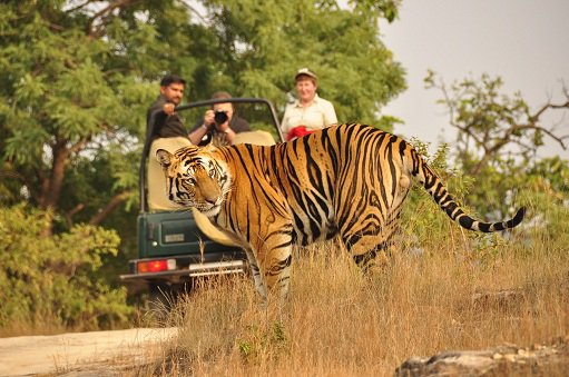 Jungle safari packages pench